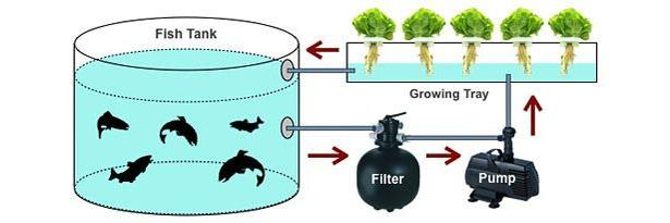 aquaponics-diagram